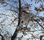 崇禅寺に桜を見に行ったけどまだ咲いてなかった