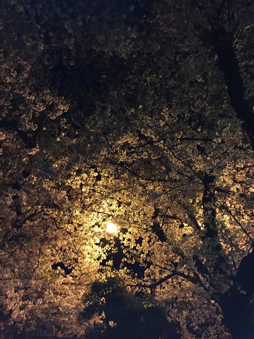 柴島浄水場 桜の通り抜け