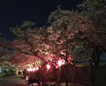 崇禅寺 柴島(くにじま)浄水場の夜桜見学に行ってきた